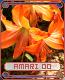 amari142cd75.png
