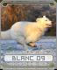 blanc09biec3.png